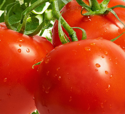 Organic lycopene extracted from tomato fruits